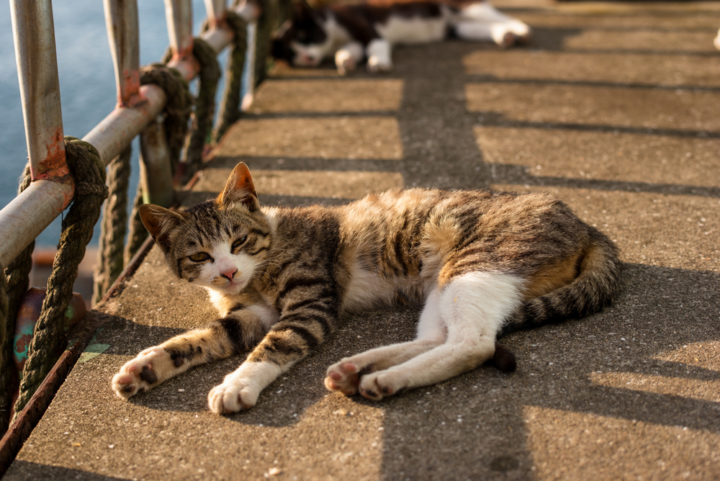 猫03_s