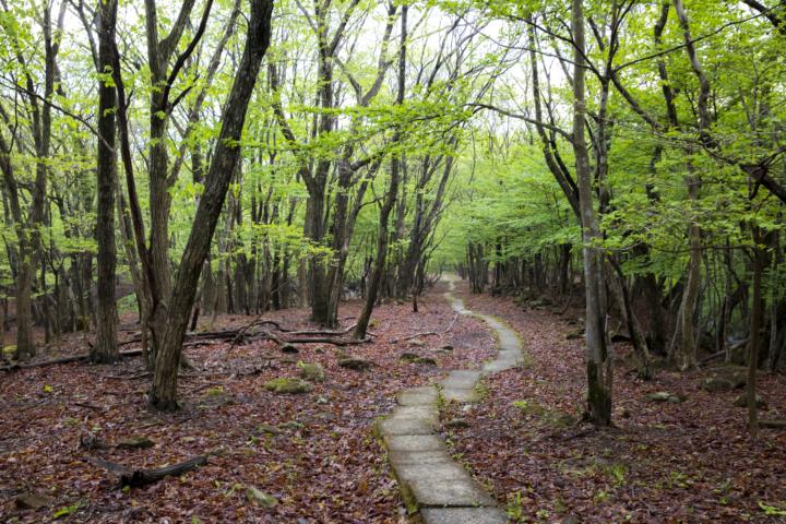 リラクシアの森①